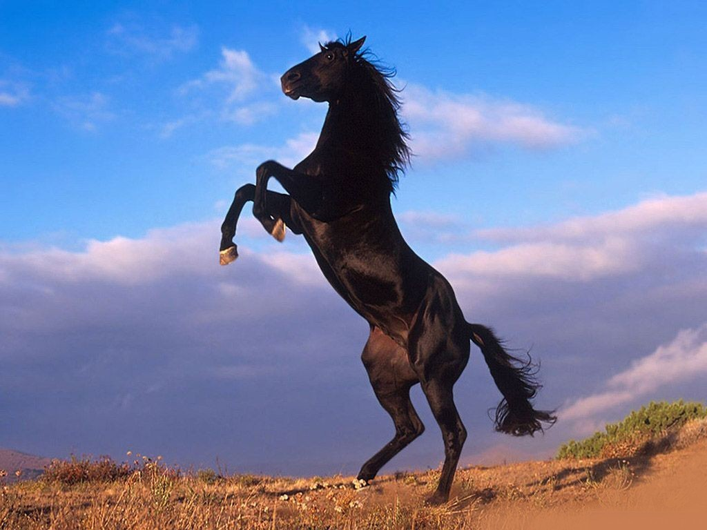 Koleksi Gambar Kuda Okay